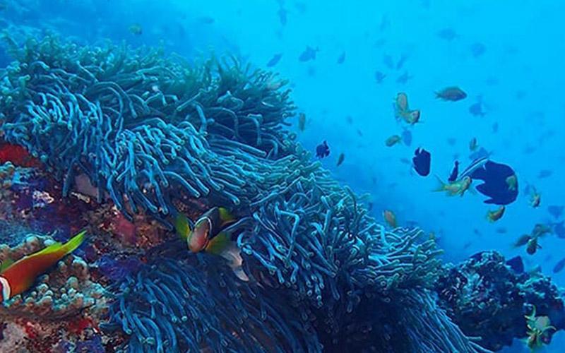 Exploring Beautiful Coral Reef at The Nautilus Maldives